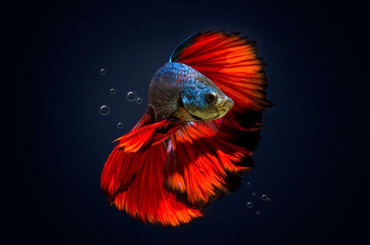 วิธีการดูแลปลา