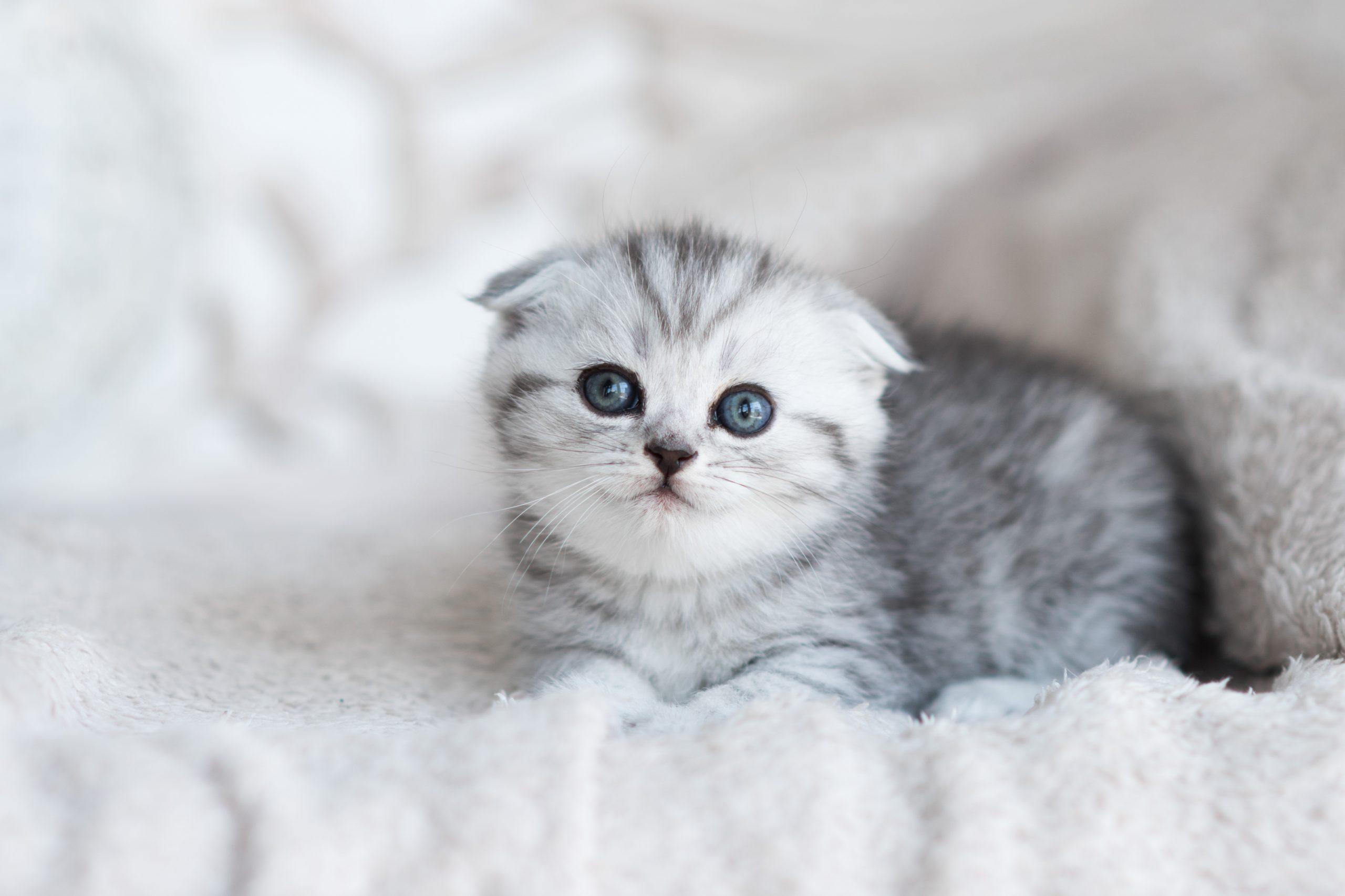 การดูแลลูกแมว